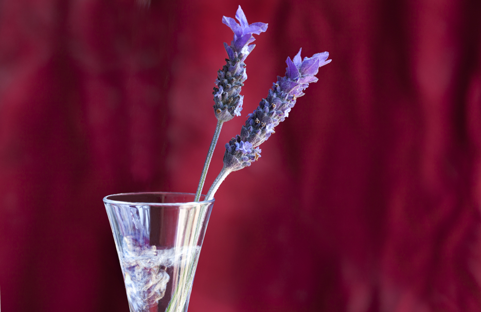 LAVENDER FLOWERS IN A GUSH OF WATER - SHARP 100 - IMG_9012