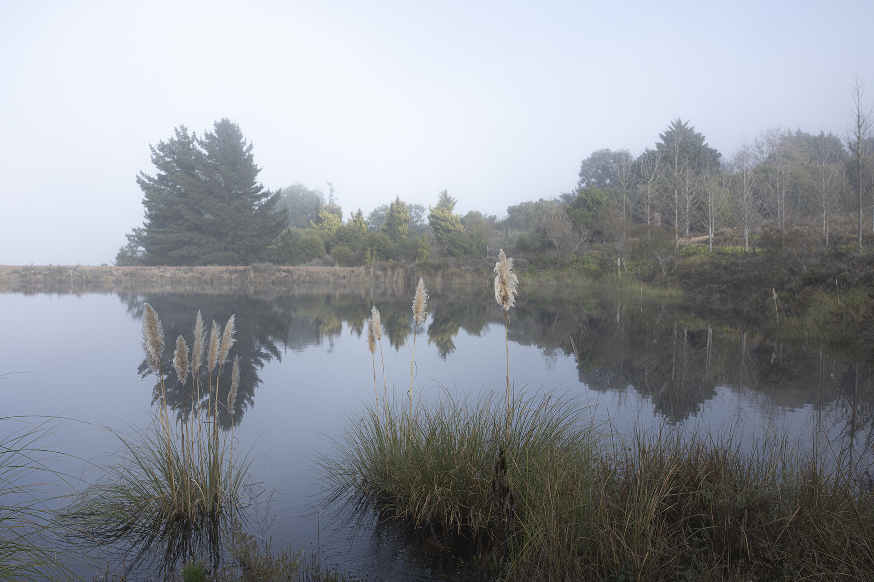 MIST OVER DAM & PAMPAS GRASS-SMALLER-P17A5522