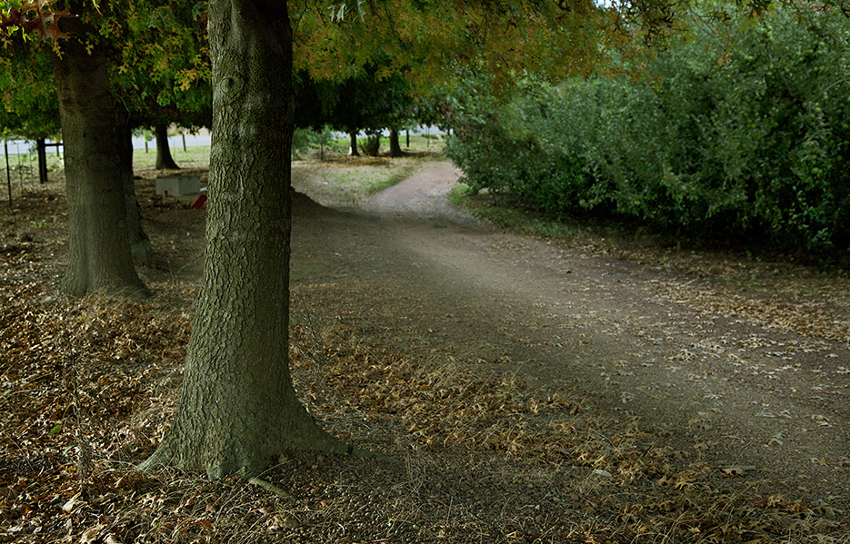 PATHWAY BETWEEN TREES & BUSHES - warmer - sharp 50 - 935 PIXELS - IMG_7436